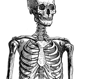 Body anatomy, Human Anatomy, Anatomy posters, 04