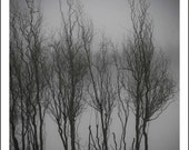 Tree Photo, Black and White Photo Fine Art Print, Foggy Morning, 8x10, Nature Photography, Monochromatic