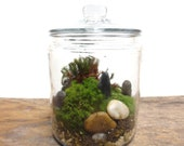 A Perfect Green Little World....Terrarium, Vibrant Moss Terrarium Indoor Garden Apartment Glass Terrarium Garden Live Moss Terrarium Green