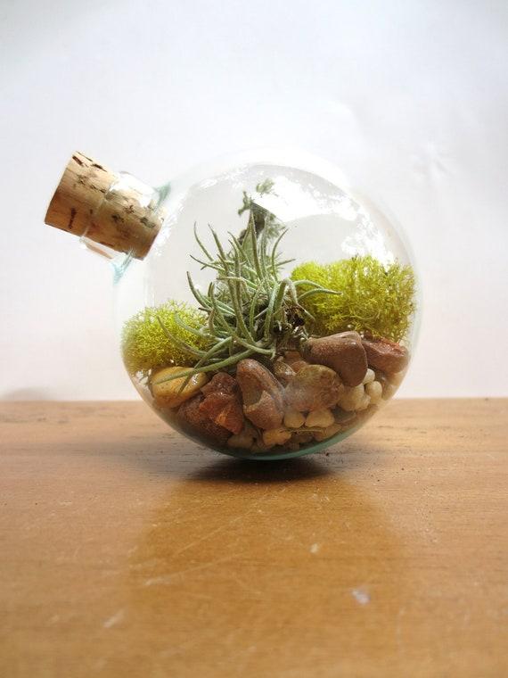 ... Unique Glass Orb Moss and Lichen Terrarium Miniature Terrarium Decor