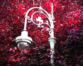 Photography Irish Street Lamp in Autumn Magenta Dublin, Ireland  Landscape Photograph Pink Red