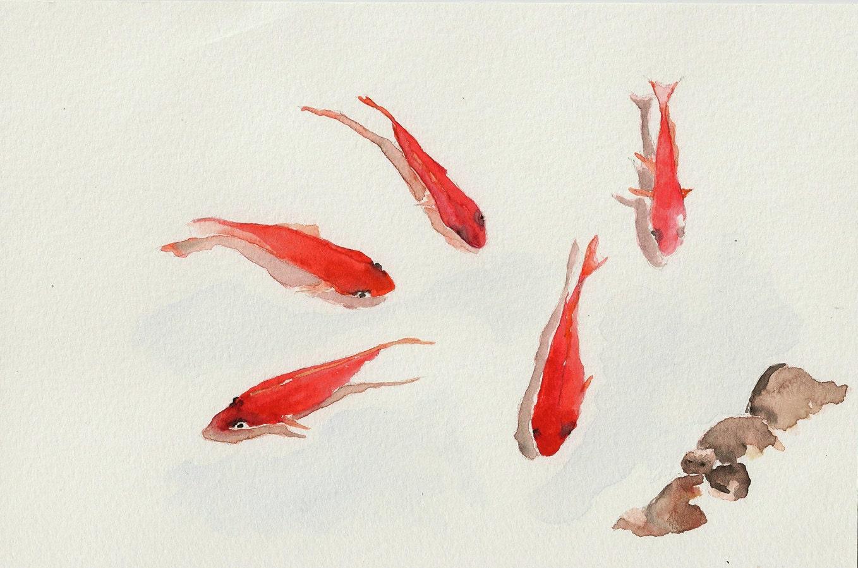 Red koi fish 6 x9 original watercolor painting for Red koi fish