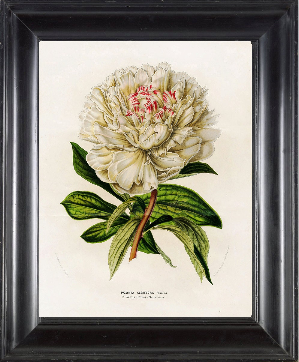 This is an image of Eloquent Printable Botanical Prints