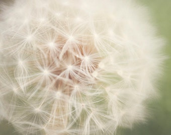 Little Wishes CANVAS  - Photographic Print - Dandelion, Macro, Green, Whimsical, Dreamy, Photograph, Wall, Decor, Hanging, Cottage, Chic
