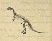 Digital Image Dinosaur Skeleton Download Bones Printable Graphic Antique Clip Art for Transfers Making Prints etc HQ 300dpi No.2166
