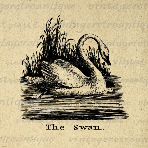 the black swan book pdf
