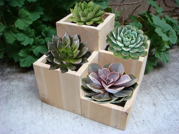 "Flower planter, garden flower pot, wood, Mother's Day Gift, tabletop size, 4 compartments for various plants and flowers: ""Jewel"""