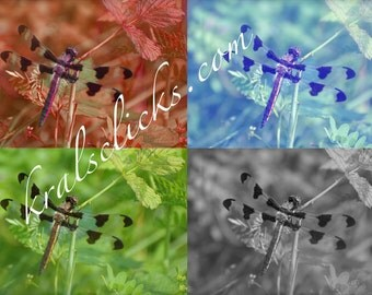 Digital Dragonfly/ 4 Panels One Picture
