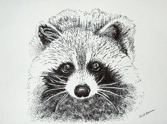 how to draw a raccoon face easy