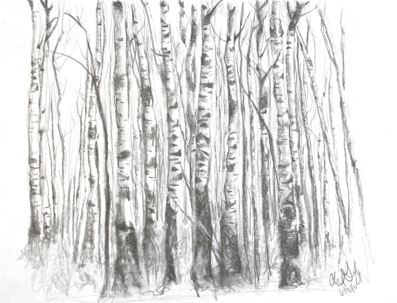 birch tree leaves drawing