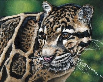 Clouded Leopard Painting-Print