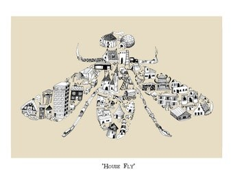 House Fly.  Signed, giclée print.