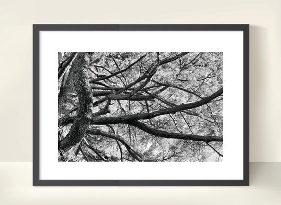 Tree Branches. Monochrome. Nature Photography. Black & White Print by OneFrameStories.