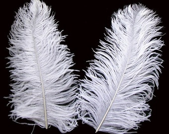 "14/16"" White Ostrich Feathers.  UK Supplier."