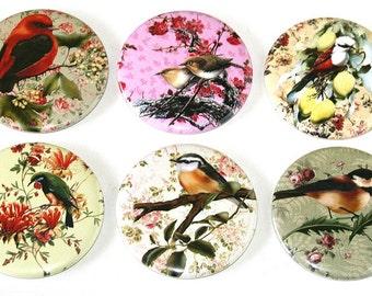Bird Floral Illustrations - Set of 6 Large Fridge Magnets