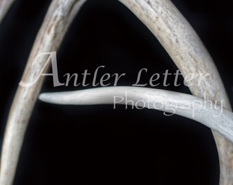 SALE-Letter A, Antler, Whitetail Buck Shed, Photography, Alphabet, Hunting