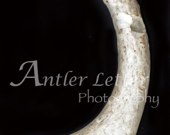 SALE-Letter J, Antler, Whitetail Buck Shed, Photography, Alphabet, Hunting