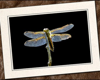 3 Dragonfly Photo Note Cards - Dragonfly Note Card - 5x7 Dragonfly Photo Greeting Cards Handmade - Dragonfly Cards With Envelopes (IN125)