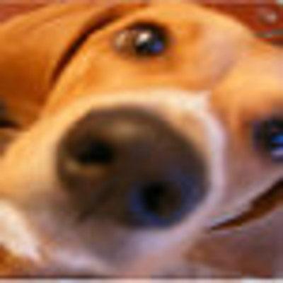 happyhoundcreative