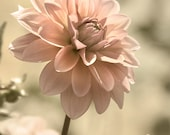 Dahlia Photo, Bedroom Photography, Flower Photography, Pink Bedroom Decor, Bedroom Wall Art