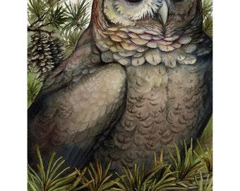 Coniferous - Owl Print