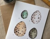 Eggy Note Cards