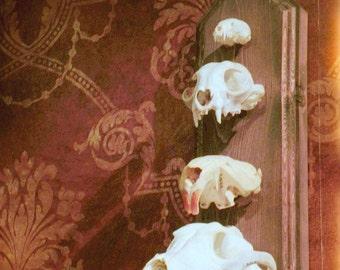 Woodland Animal Skulls Photo - Taxidermy Animal Bones Photograph - Rustic Forest Nature Photography