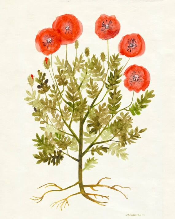 "Red Poppies Print - Autumn Flower Wall Art, Botanical Fall Artwork, Poppy Art 8""x10"", 5""x7"", 9""x12"" or 11""x14"""