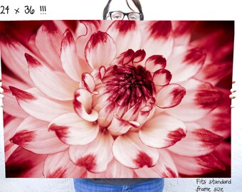 Large Scale wall art - 24 x 36 poster size nature fine art photography of red and white dahlia flower
