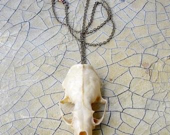 Small Animal Skull Pendant Natural Finish