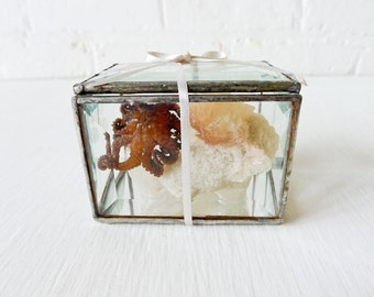 10% SALE - Little Miss Seawitch in a Box - REAL Octopus Specimen on India Crystal