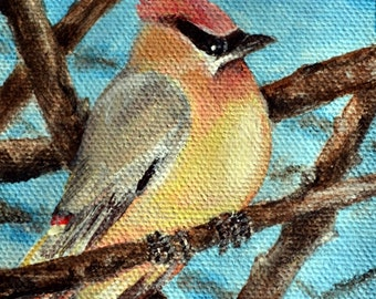 Original Acrylic Cedar Waxwing Bird Painting ACEO art card by Amanda Christine
