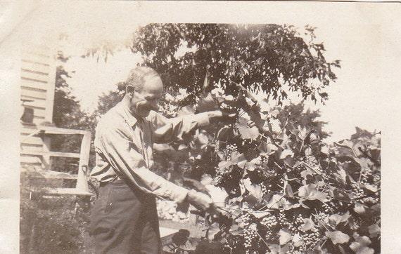 Grandad's Grapes- Backyard Grapevine- 1910s Vintage Photograph