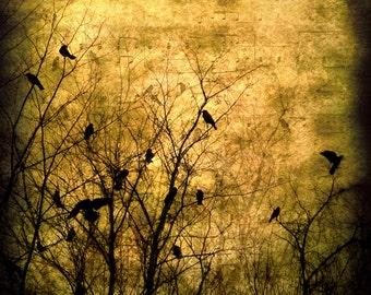 Crow Photograph Goth Raven Wall Art Winter Branches Crows Music Notes Deep Golden Sepia decor 8x8