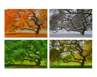 Four Seasons Wall Art, Japanese Maple Tree, 6X9 Print Set, Landscape Photography, Tree of Life, Autumn, Winter, Spring, Summer, Nature, Zen