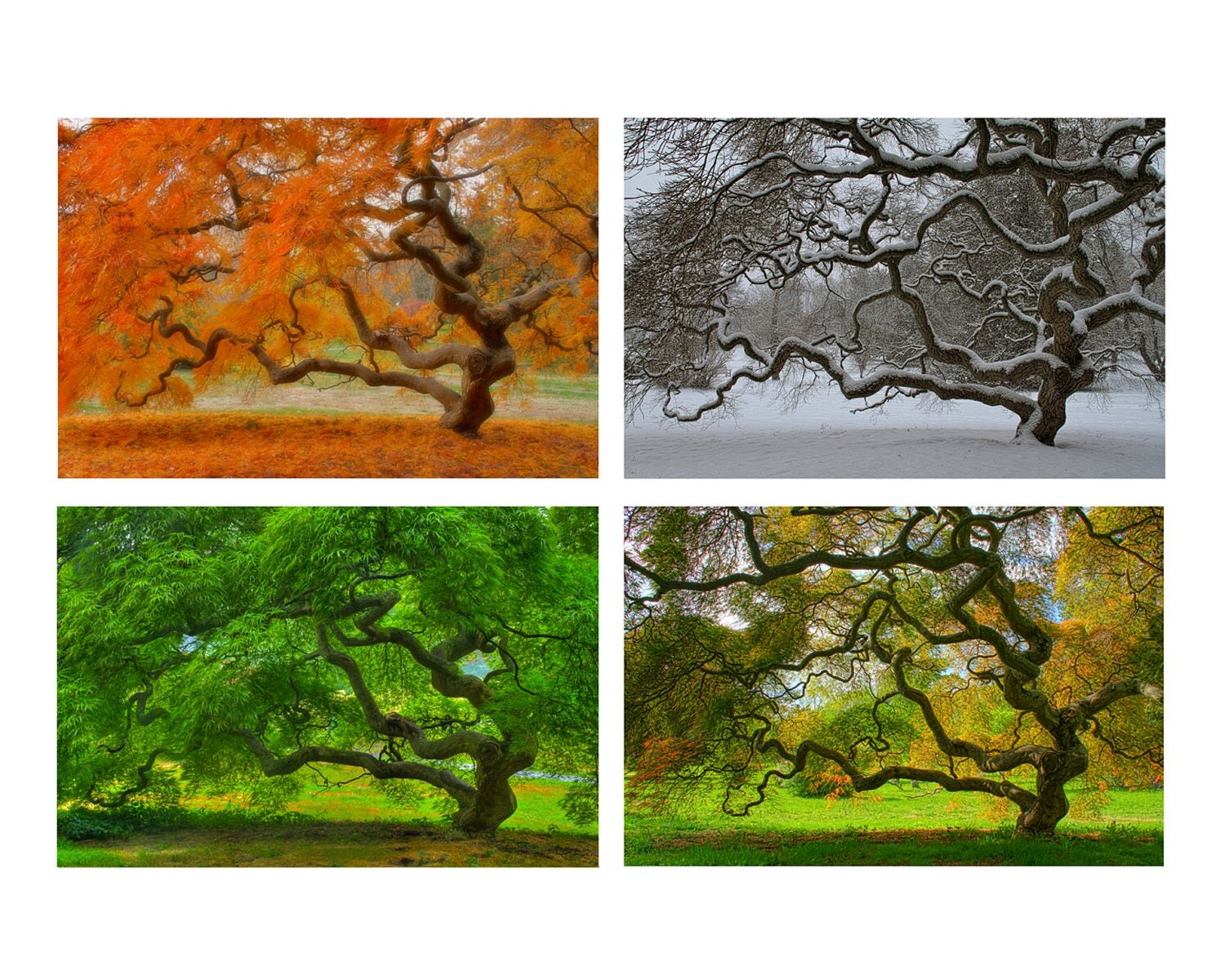 4x6 Print Set Four Seasons Landscape Photography Tree Of Life