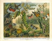 Antique Print of Insects, Butterflies, Moths, Caterpillars, Entomology Color Lithograph 1920s, Arthropods Defense Mechanisms