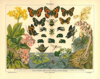 Vintage Entomology Print,  Butterflies, Bees, Color Lithograph Insects Evolution