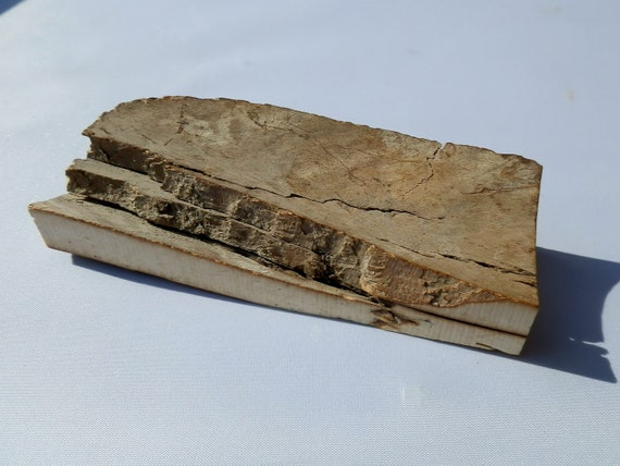 Mammoth Tusk for Scrimshaw or lapidary projects. Color tones.