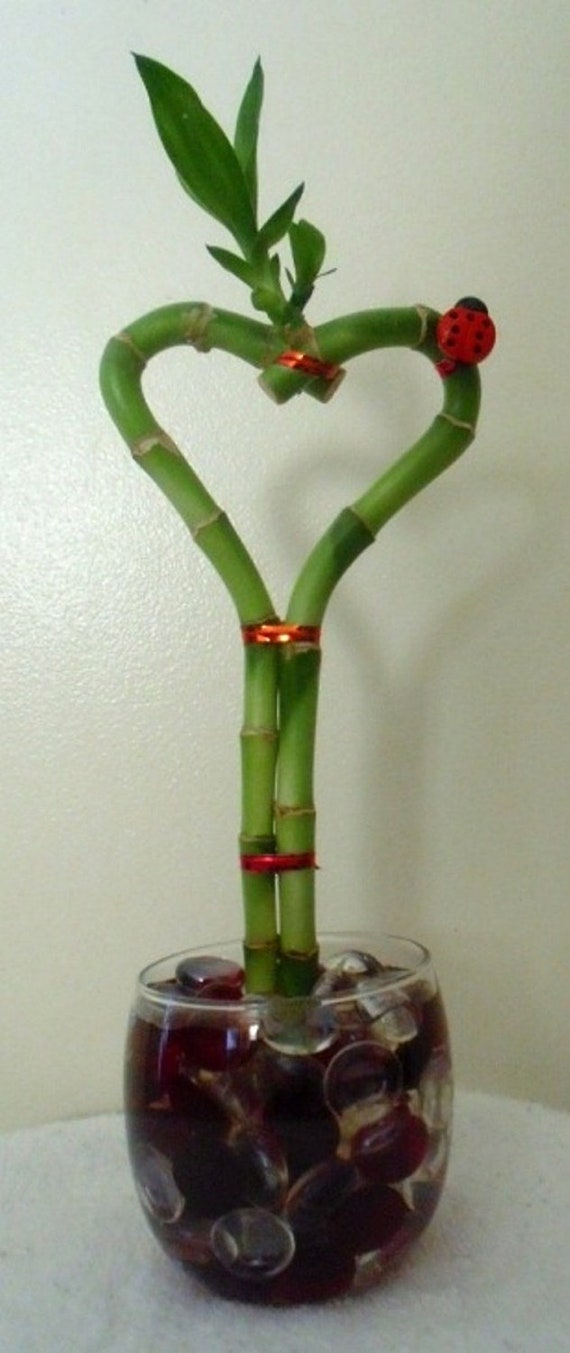 Lucky Bamboo Heart Arrangement with Red Ladybug in Vase with Glass Gems