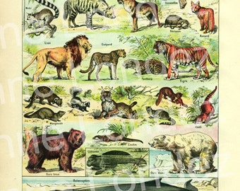 Old  animals print mammals French dictionary page 2, engraving fauna illustration 1922