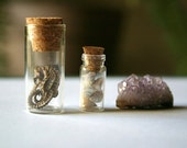 Seahorse and Amethyst Specimen Set