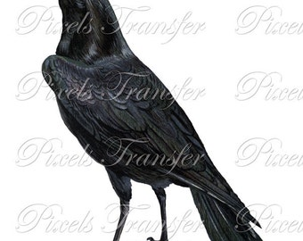 RAVEN Instant Download Digital Downloads, black bird crow clipart 189