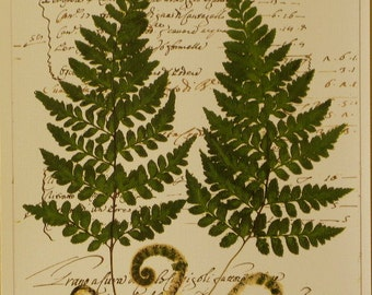 Fern with vintage script