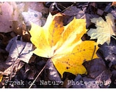 Fine Art Photography Digital Download Leaf Yellow Sunshine Woodland Autumn Leaves Purple Printable Art Photo