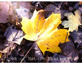 Fine Art Photography Digital Download Leaf Yellow Sunshine Woodland Autumn Leaves Purple Printable Art Photo