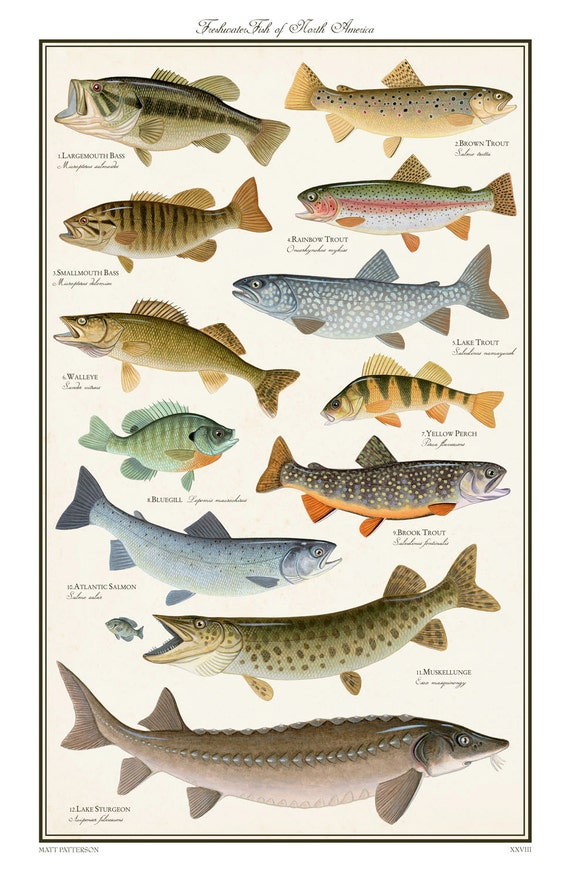 Items similar to freshwater fish of north america limited for Illinois game and fish
