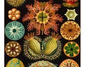 Sea Urchins Poster,  Nautical Wall Art, Ernst Haeckel Nautical Illustration, Art Nouveau Print, Vivid Colors on Black Sea Urchin Wall Art