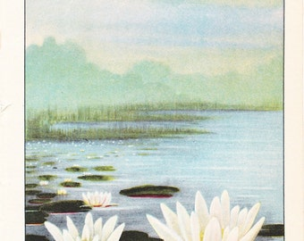 1926 Flower Print - Pond Lily - Vintage Home Decor Botany Art Illustration for Nature Science Woman Great for Framing