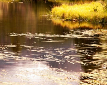 Golden Pond Colorado Water Fall Autumn Grasses Warm Yellow Lake Rocky Mountain National Park Rustic Cabin Lodge Photograph